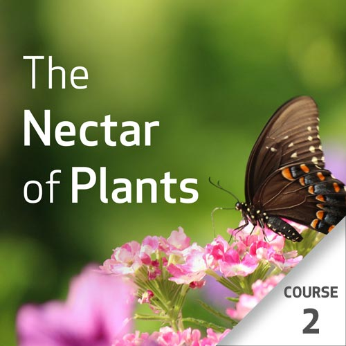 The Nectar of Plants: Essential Oils and Chinese Medicine Series - Course 2
